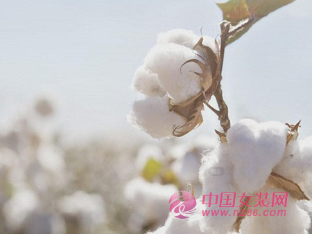 新格局下棉花质量是关键(图1)